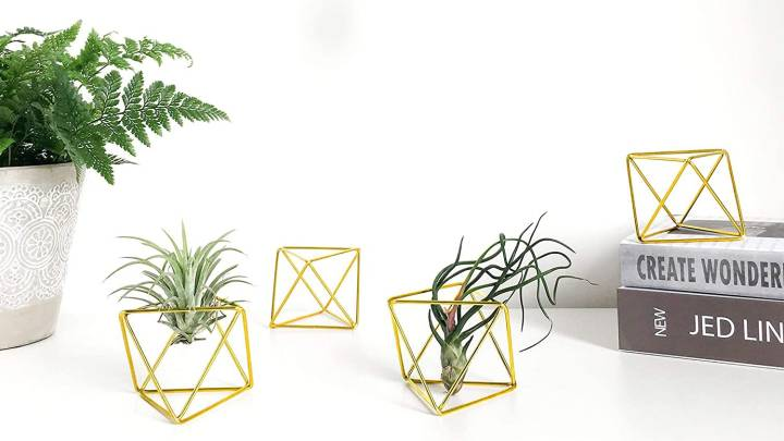 Top Air Plant Holders
