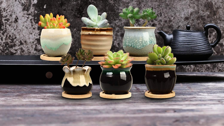 Best Pack of Mini Pots