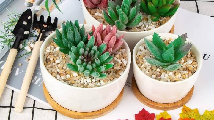 Top Succulent Pots