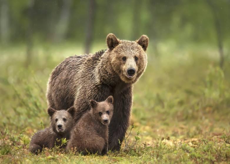bears on submarine