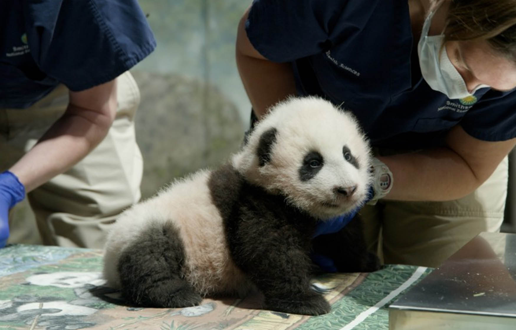 The most famous baby animal on the planet finally gets a name
