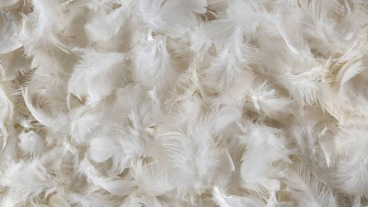 chicken feather protein