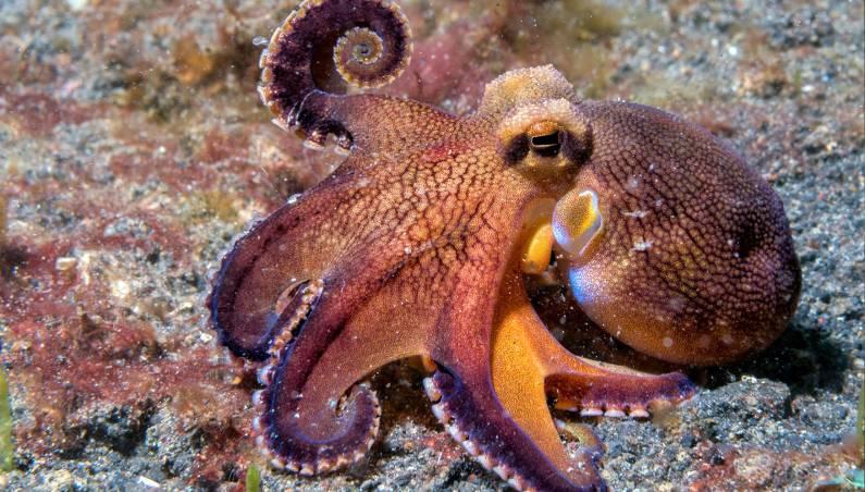 octopus punching fish