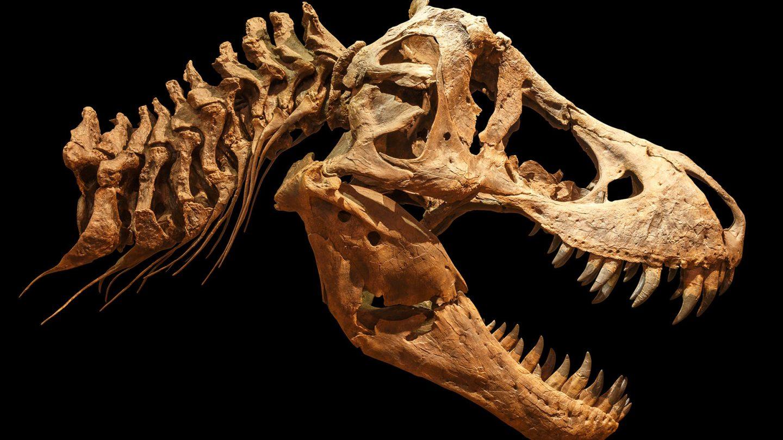 tyrannosaur baby