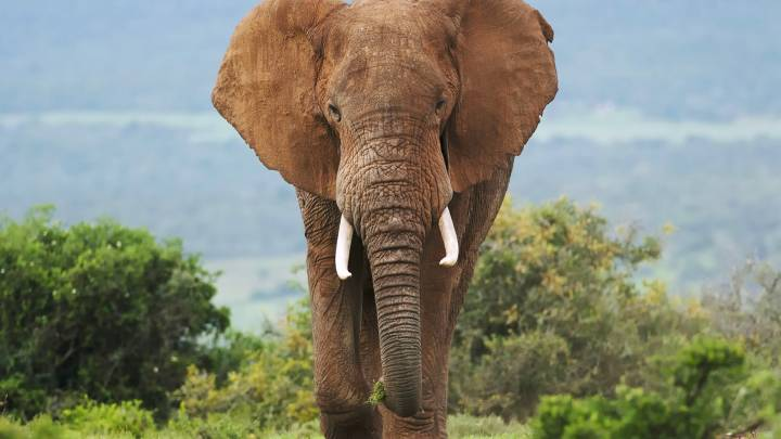 illegal ivory ebay