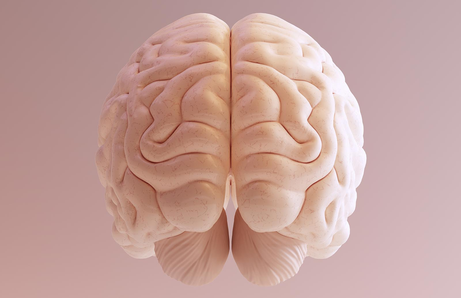 Scientists figured out why humans have big brains