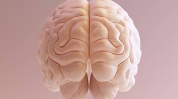 brain parasite