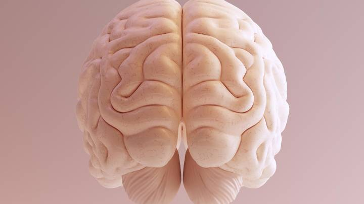 why humans have big brains