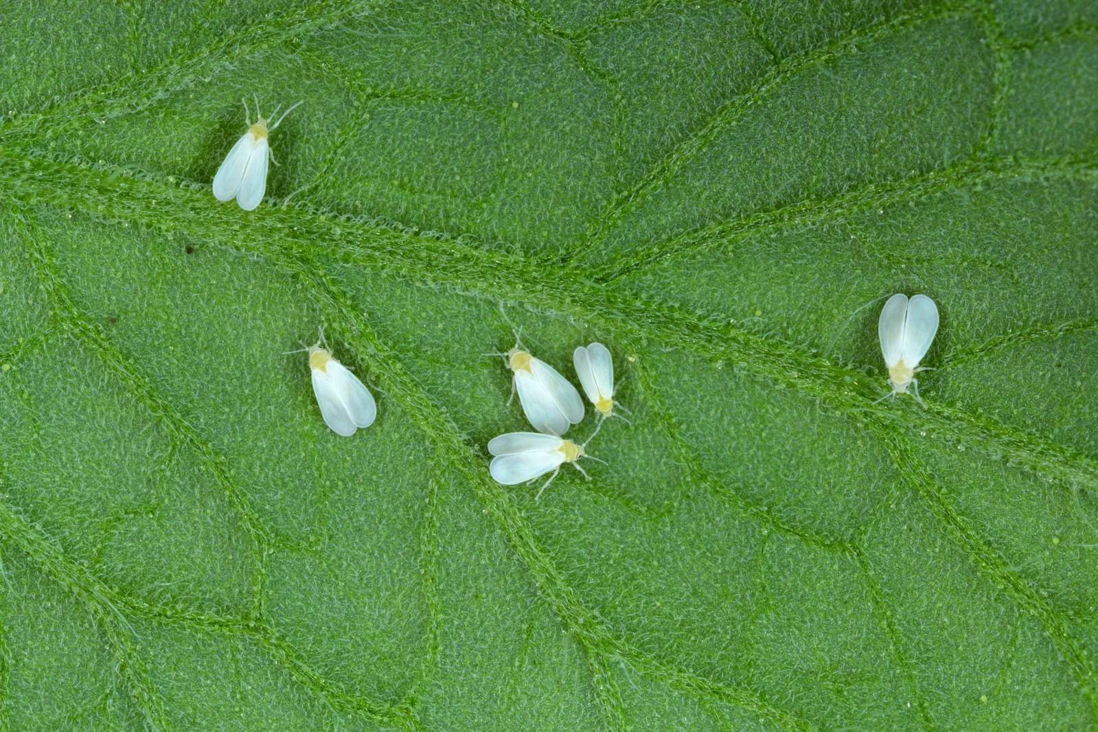 <p>A bug acquired the DNA of a Poisonous plant, and now it's running Uncontrolled thumbnail