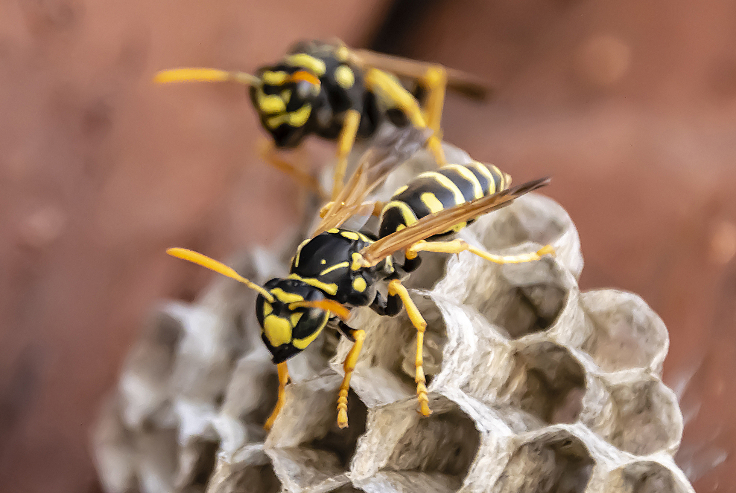 Stinging wasps are so much more important than you realize – here's why thumbnail