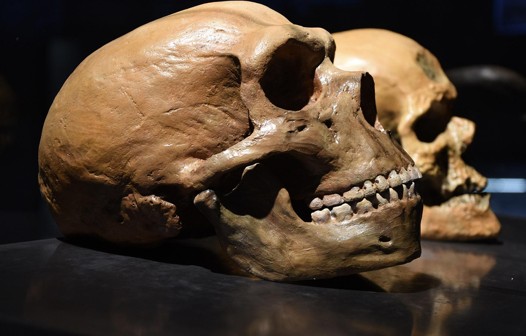Para ilmuwan menemukan fosil dari spesies baru manusia yang berusia 130.000 tahun