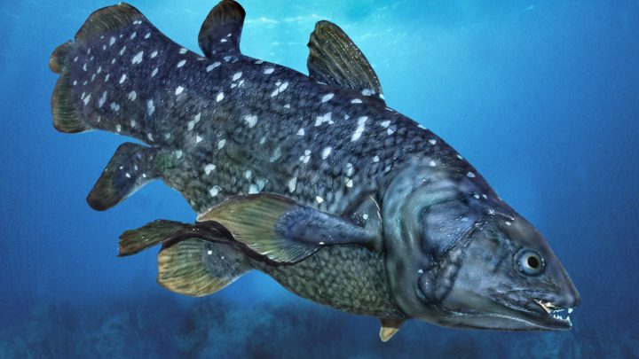 coelacanth conservation