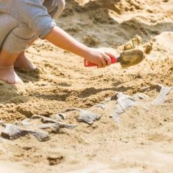 Giant Rhino Fossil