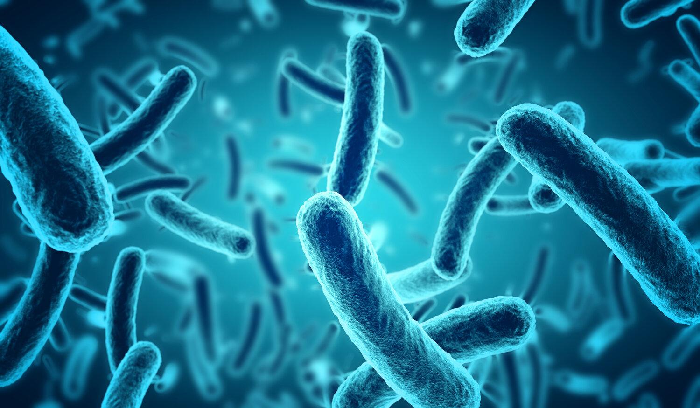 CDC menyelidiki wabah salmonella di 25 negara bagian – BGR